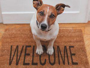 p135  11053 3d wenskaart welcome dog 1