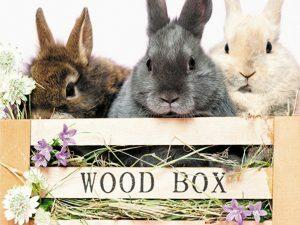 p1509  11044 3d wenskaart rabbit wood box 1