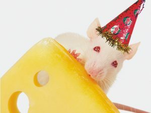3D Wenskaart Mouse Party