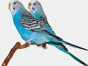 p3370  11036 3d wenskaart parakeet on tree 1