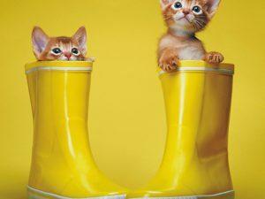 3D Wenskaart Kitty Shoes