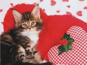 p6489  11056 3d wenskaart lovely kitty 1