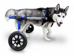 Rolstoel Dog Medium/Large Blauw 09-12, Foam, 12-31 kg